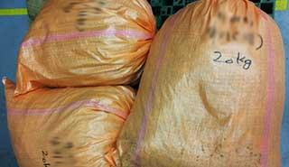 감초 운송 포장